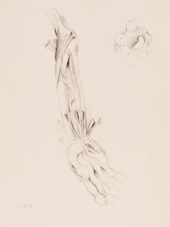 Pencil drawing of a forearm human specimen by Victor Gordon