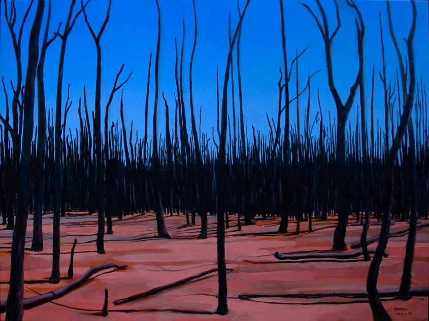goonoo-forest